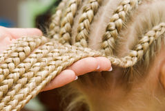 French braids Stock Image
