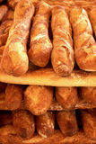 French breads Stock Image