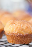 French Breakfast Puffs Stock Image