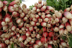 French Breakfast Radish, Raphanus sativus. Cultivar with elongated red roots and white tip portion, milder in taste but turning pithy with age, used in salads Stock Image
