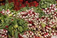 French breakfast radish sold at a farmers market Royalty Free Stock Photos