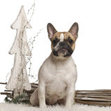 French Bulldog, 10 months old, in front of white Stock Images