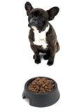 French Bulldog Royalty Free Stock Images