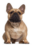 French Bulldog, 2 years old, sitting Stock Images