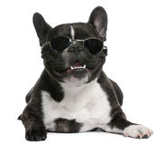 French Bulldog, 4 years old, wearing sunglasses Stock Images