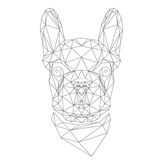 French Bulldog, animal head. French Bulldog, domestic animal head in abstract polygonal style, black lines on white background illustration, vector file Royalty Free Stock Photography