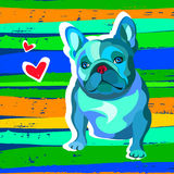 French bulldog background. Vector illustration. Royalty Free Stock Images