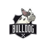 French bulldog with banner and shield. Illustration of a french bulldog with banner and shield Royalty Free Stock Image