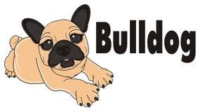 French bulldog with black inscription Stock Photo