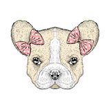 French Bulldog in the bows. Cute puppy. Vector illustration for a card or poster. vector illustration