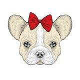 French Bulldog in the bows. Cute puppy. Vector illustration for a card or poster. royalty free illustration