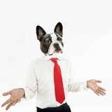 French Bulldog business man with hands extended Royalty Free Stock Photography