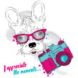 French bulldog with a camera. Dog vector. Photographer. Vector illustration for greeting card, poster, or print on clothe Royalty Free Stock Images