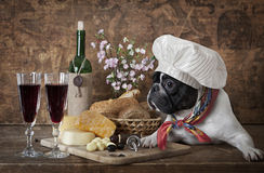 French bulldog in chef's hat Stock Photo