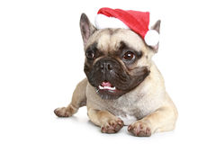 French bulldog in a Christmas hat Stock Photography