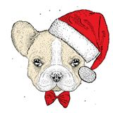French bulldog in a Christmas hat. Cute puppy. New Year`s and Christmas. Vector illustration for a card or poster. Stock Photos