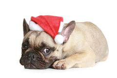 French bulldog in christmas hat lies Stock Photo
