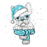 French bulldog in a Christmas hat and sunglasses. Royalty Free Stock Photography