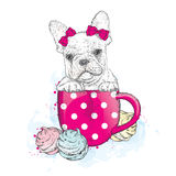 French Bulldog in a cup. Cup and marshmallows. Cute puppy. Ped Stock Photos