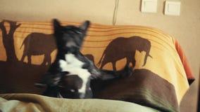 French Bulldog Dance home interior