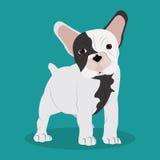 French bulldog design , vector illustration Royalty Free Stock Photo
