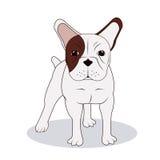 French bulldog design , vector illustration Stock Images