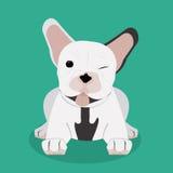 French bulldog design , vector illustration Royalty Free Stock Photos