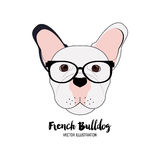 French bulldog design , vector illustration Royalty Free Stock Images