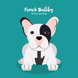 French bulldog design , vector illustration Stock Photo