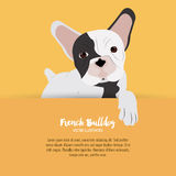 French bulldog design , vector illustration Stock Image