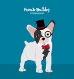French bulldog design , vector illustration Stock Photos