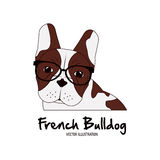 French bulldog design , vector illustration Stock Photography