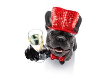 Happy new year dog celberation Stock Photos