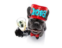 Happy new year dog celberation Royalty Free Stock Photos