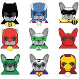 French bulldog  Dog Superheros Stock Image