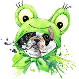 French bulldog dog T-shirt graphics. french bulldog  illustration with splash watercolor textured  background. unusual illustratio Royalty Free Stock Photo