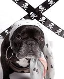 Puppy image stock image
