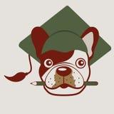 French bulldog face Royalty Free Stock Image