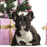French Bulldog in front of Christmas decorations Royalty Free Stock Photography