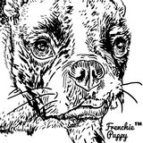 French bulldog. Front portrait of a French bulldog Stock Photography