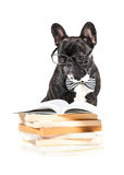 French Bulldog in glasses Stock Images
