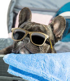 French bulldog with glasses Stock Images