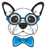 French bulldog with glasses Stock Photo