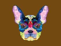 French bulldog head in geometric pattern Royalty Free Stock Photo