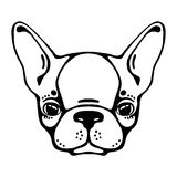French bulldog head isolated on white background. Vector illustration. French bulldog head isolated, white background. Vector illustration Stock Photos