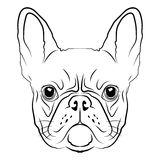 French Bulldog head logo or icon in white for a mascot and T-shirt graphic. Royalty Free Stock Photography