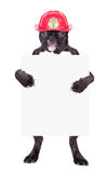 French bulldog in a helmet Royalty Free Stock Photos