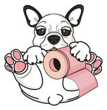 French bulldog hold roll of paper Stock Images