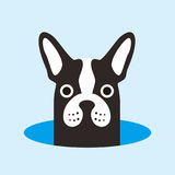 French bulldog on the hole,watching, vector illustration. French bulldog on the hole,watching vector illustration Royalty Free Stock Photo