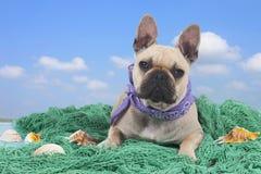 French bulldog on holidays Stock Image